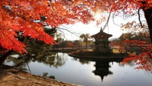 tur asia,korea,winter,jeju island,nami island,winter sonata